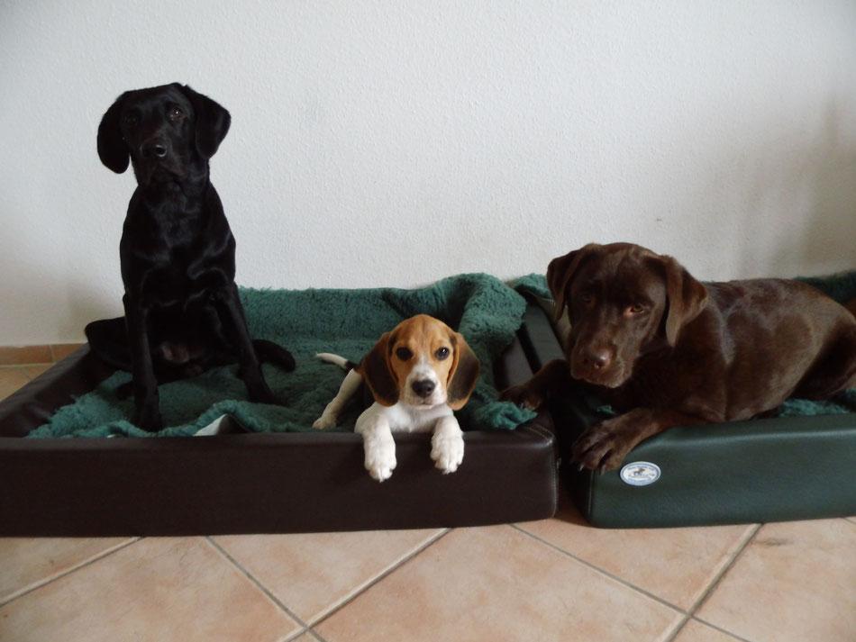 Finch (8 Monate alt), Hunter (4 Monate alt) und Toni (4 Jahre alt)