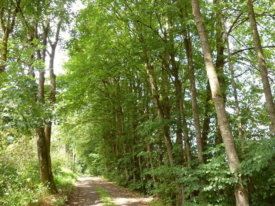 Leni und Toni wandern mit ihrem Hund Clara über den Westerwaldsteig von der Holzbachschlucht zum Secker Weiher