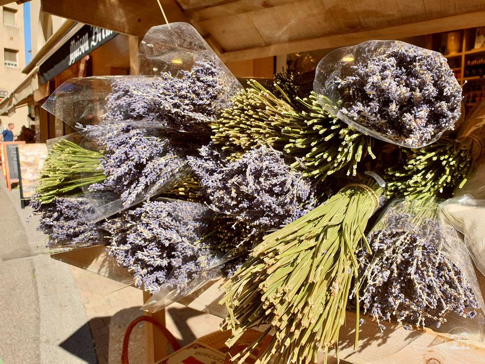 Altstadt von Avignon Lavendel Provence Südfrankreich Leni und Toni mit dem Wohnmobil in Avignon