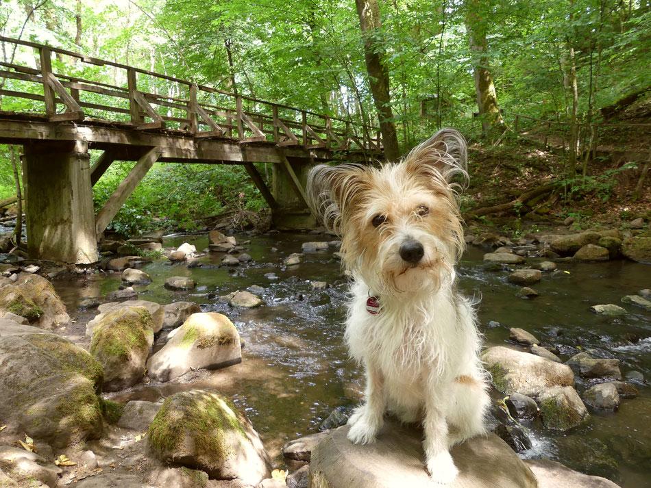 Leni und Toni wandern mit Hund Clara durch die Holzbachschlucht im Westerwald