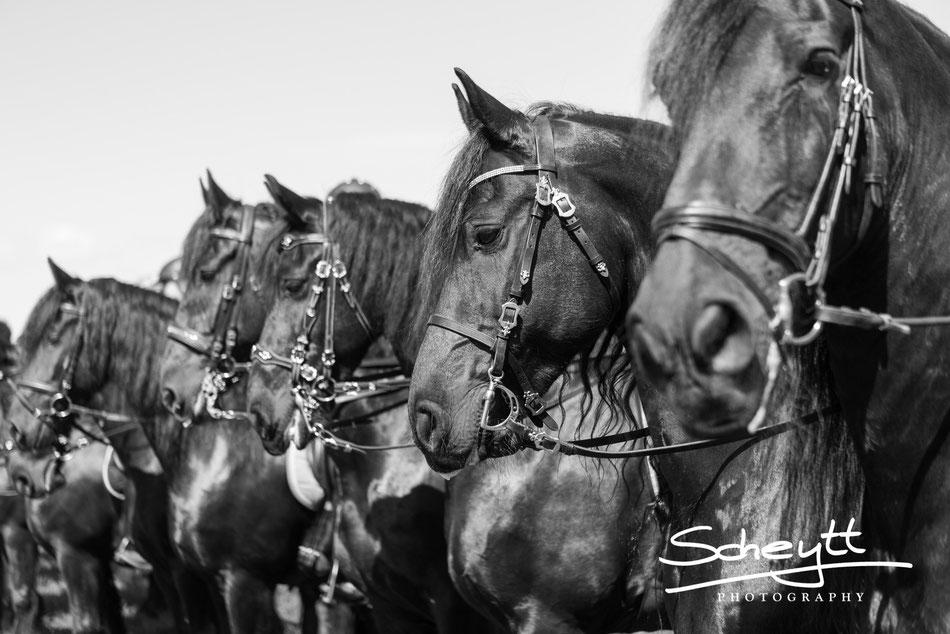 Auch die Pferde fühlen sich wohl. Sie warten ganz entspannt nebeinander, bis es weitergeht. Der Reihe nach: Onne, Sjolke, Hero, Casanova und Dutch.