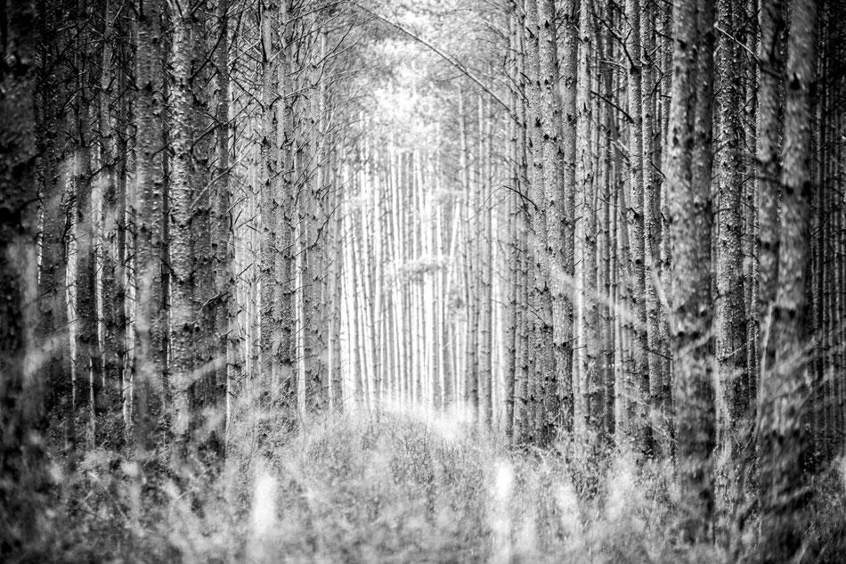 landscape 100x80 auf  Hahnemühle Photorag