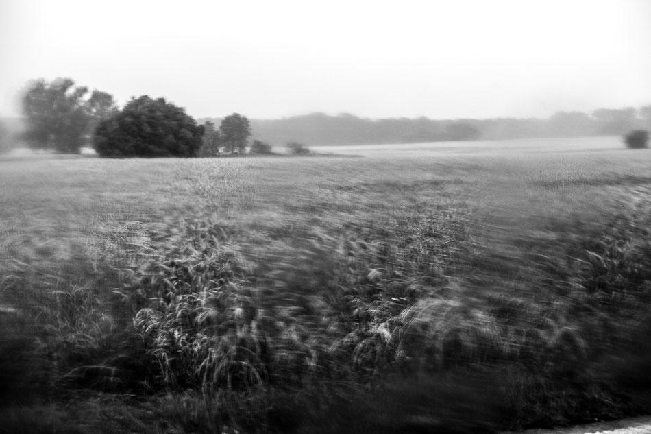 Landscape, 100x80cm, Hahnemühle Photorag, 2018