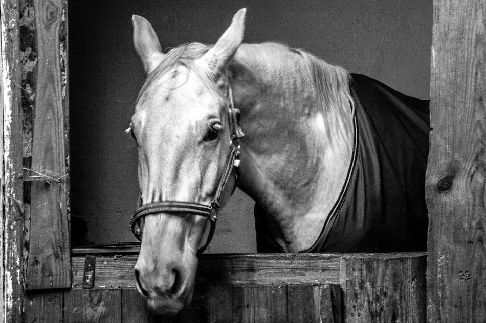 Horses, 100x80cm, Hahnemühle Photorag, 2014