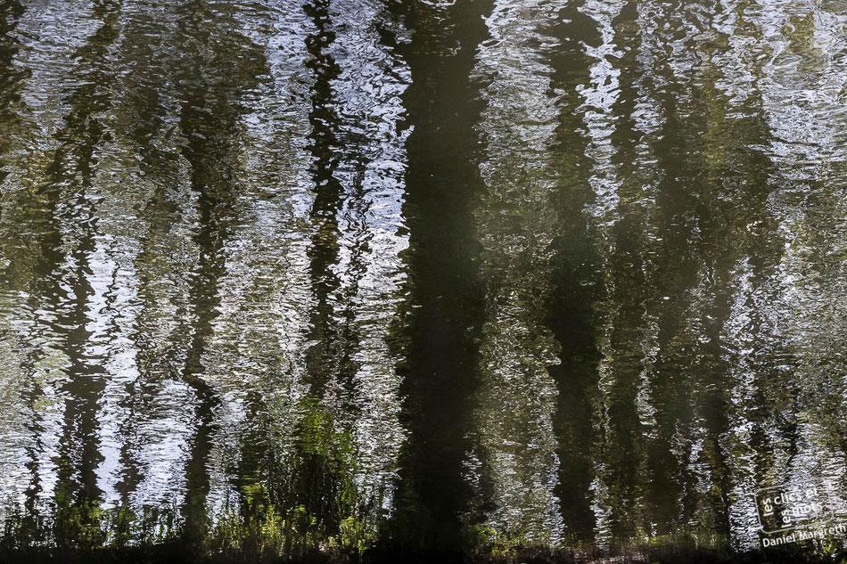 Série Reflets. Forêt #1. 13 avril 2014.