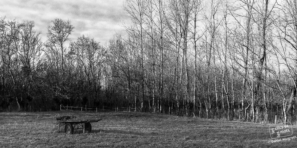 La charrette abandonnée. Liez. Vendée.
