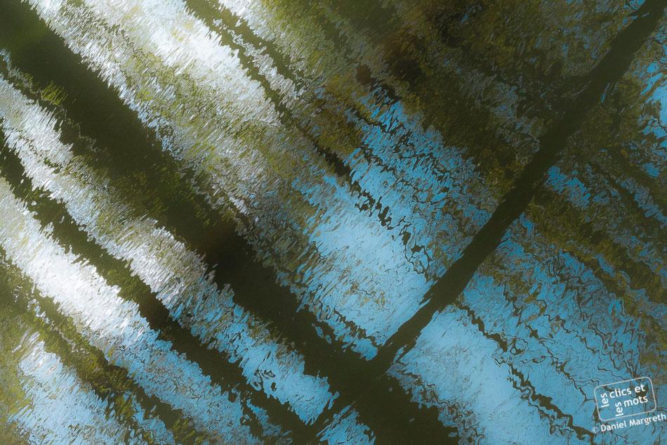 Série Reflets. Forêt #4. 13 avril 2014.