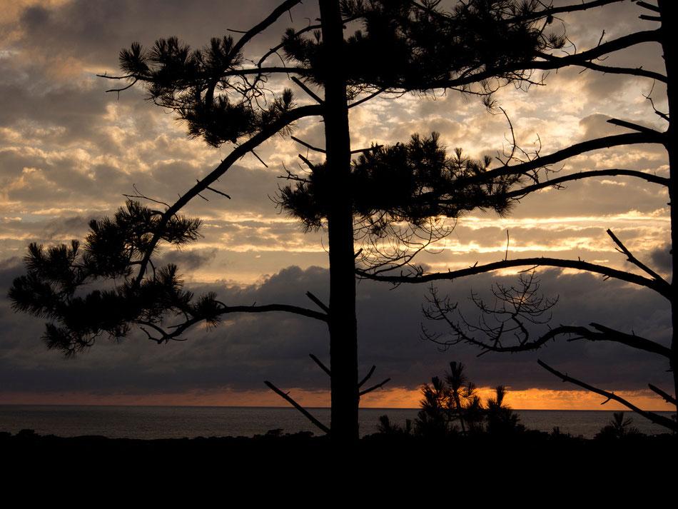 Sunset Hossegor IV  2013