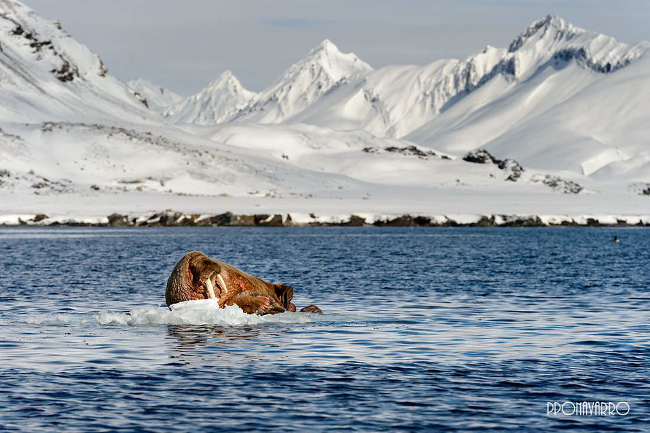 Photo expedition to Svalbard