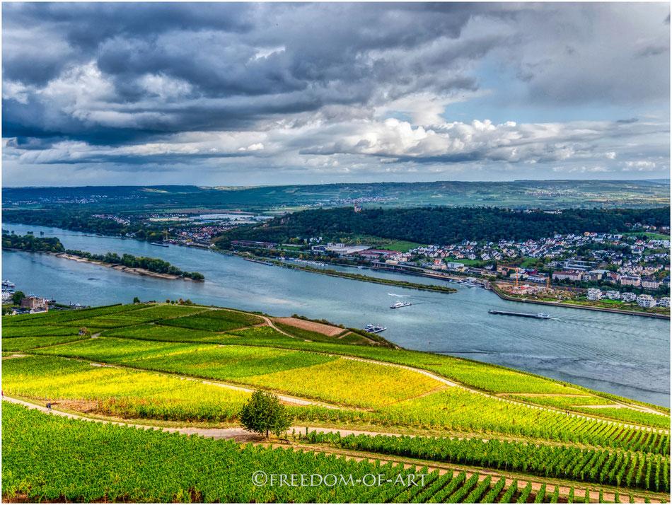 Weinanbau am Mittelrhein bei Bingen