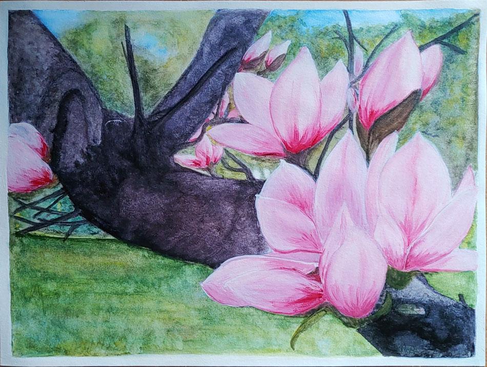 alte Magnolie, 24 x 32 cm auf Hahnemühle Aquarellpapier