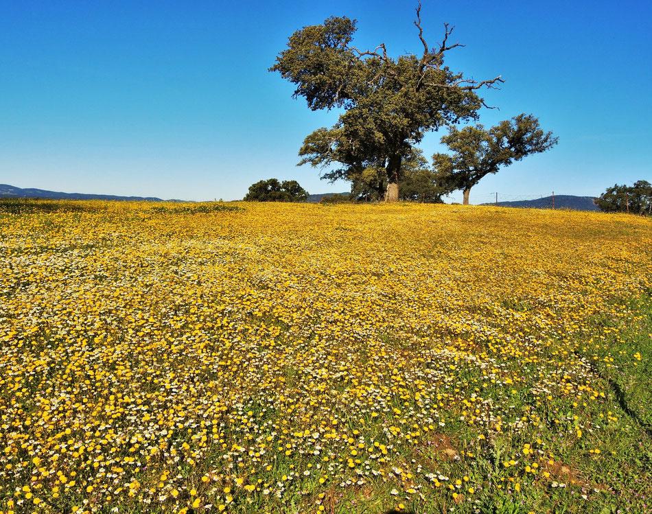 Frühling in Extremadura 27.03.2015