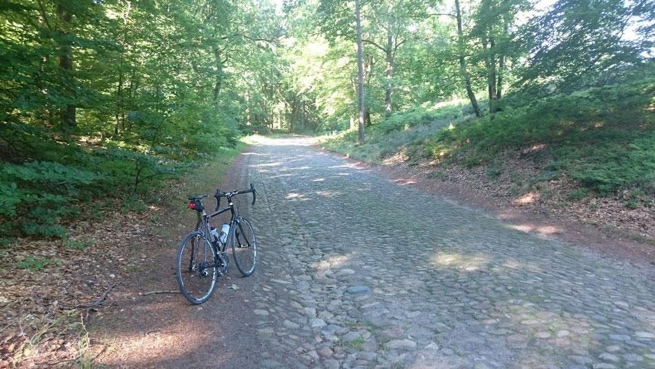 Ausgeschilderte Radstrecke nach Undeloh - nicht empfehlenswert.