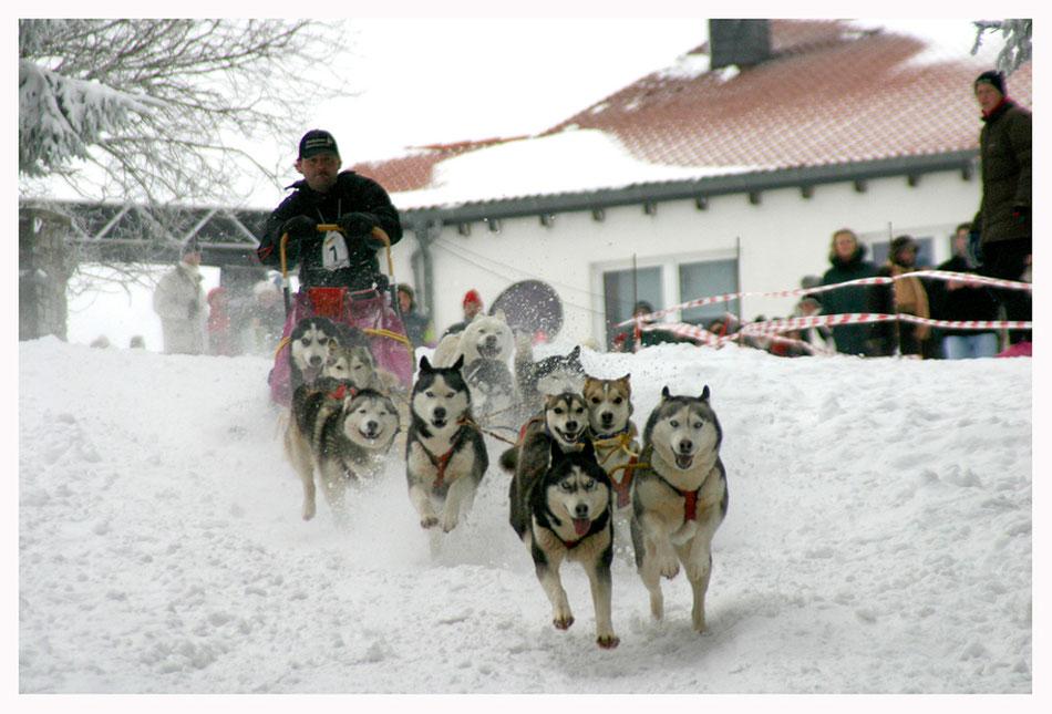 Fotokurs Sport- und Aktionfotografie Schlittenhunderennen