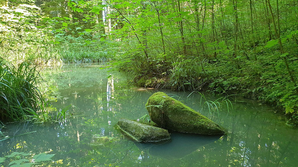 Waldweiher, gruen, naturpur, flowfly.photo