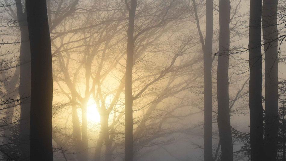 Sonnenuntergang, Nebel, Wald, Herbstzauber, flowfly.photo, Beatrice Sackmann