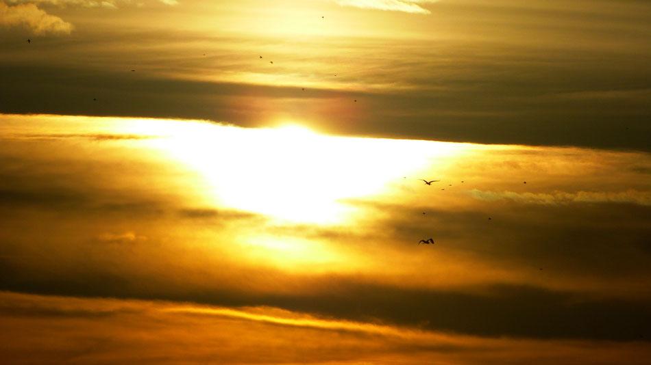 Vögel, Wolken, Sonnenaufgang,