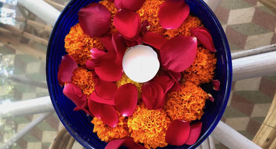 rote Rosenblätter und orange Blumen