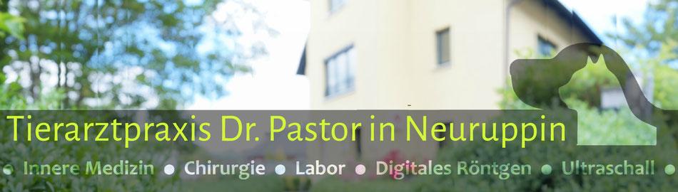 Tierarzt Pastor