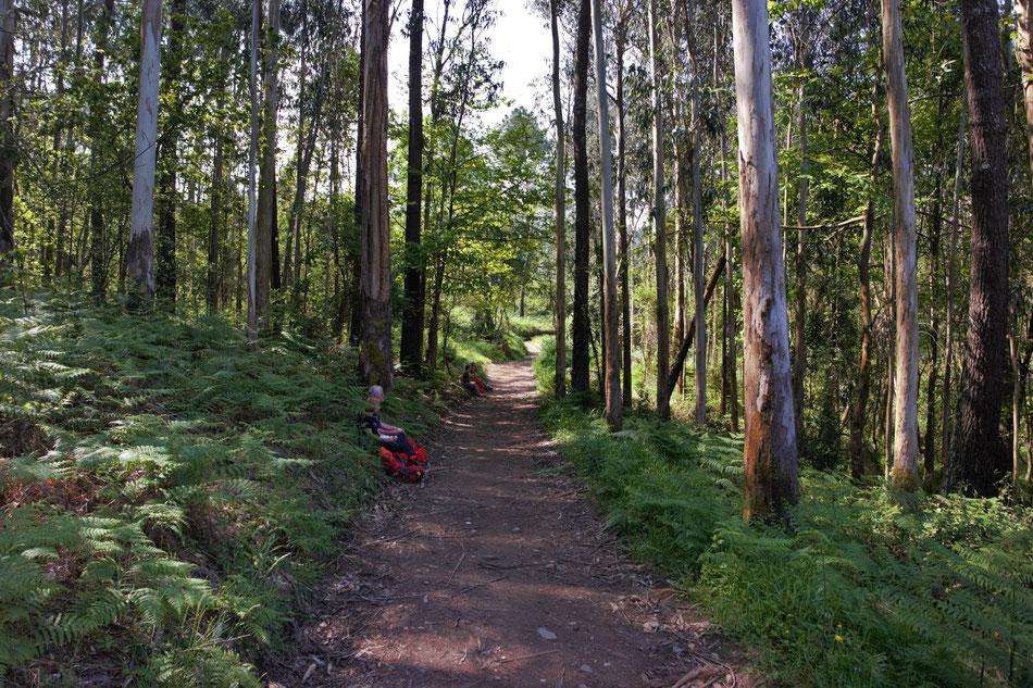 Eine Pause unter dem Eukalyptus