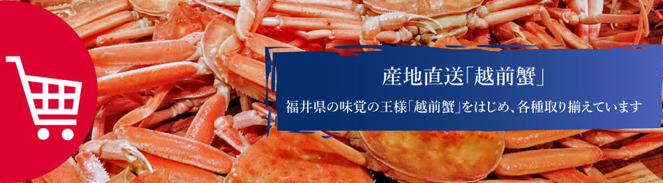 真洋水産では産地直送の越前ガニをお取扱しています