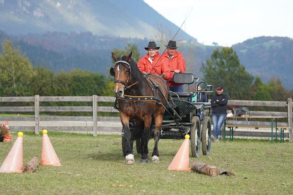 Foto: Hans Titze, Pferdeherbst Mils 2019, Kegelparcours - Johannes und Oswald Tiefenthaler mit Stute Odina