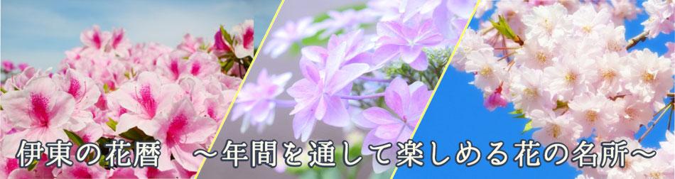 伊東の花暦 ~年間を通して楽しめる花の名所~
