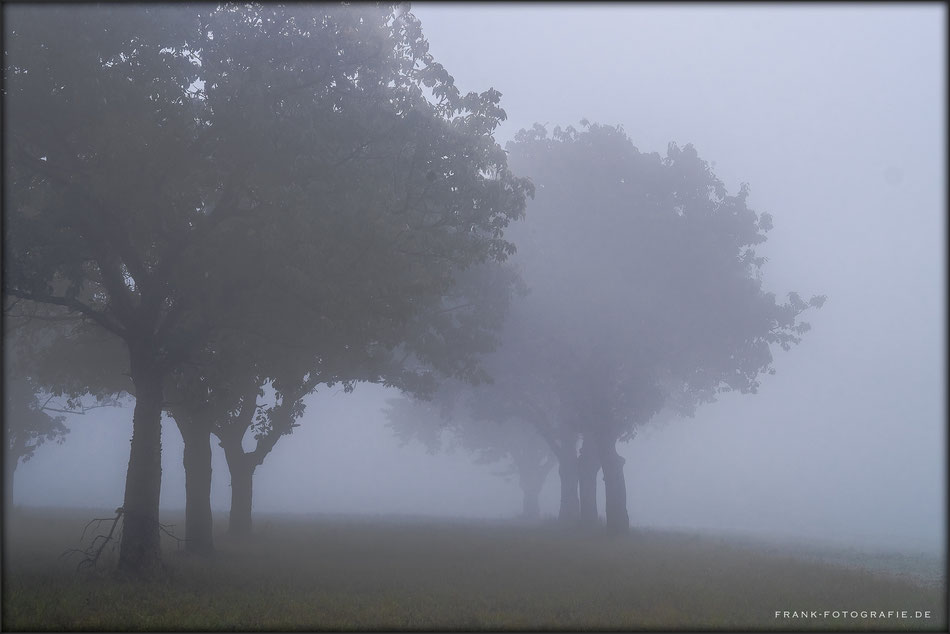 In The Mist III