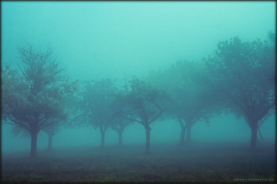 In The Mist II