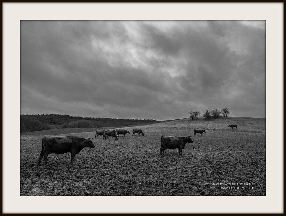 #018 - Cattle (2015-12-22) - Fine Art Print auf Shil Masterclass Baryta 290, archivfest, naturweiß, gepuffert, schwarzer Galerierahmen mit Passepartout