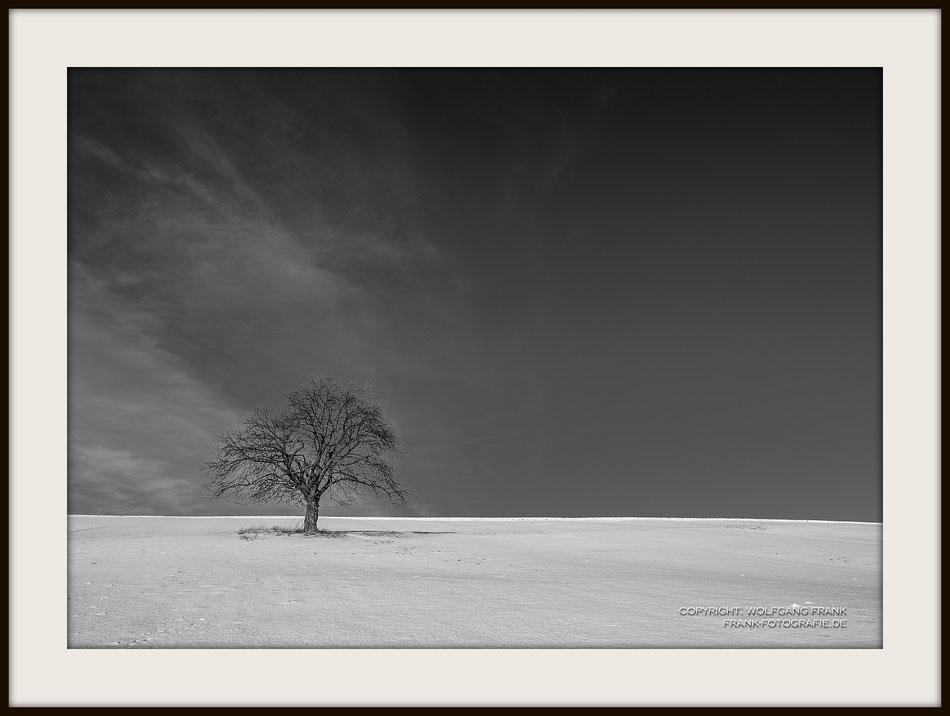 #019 - Wintertree (2017-01-27) - Fine Art Print auf Shil Masterclass Baryta 290, archivfest, naturweiß, gepuffert, schwarzer Galerierahmen mit Passepartout