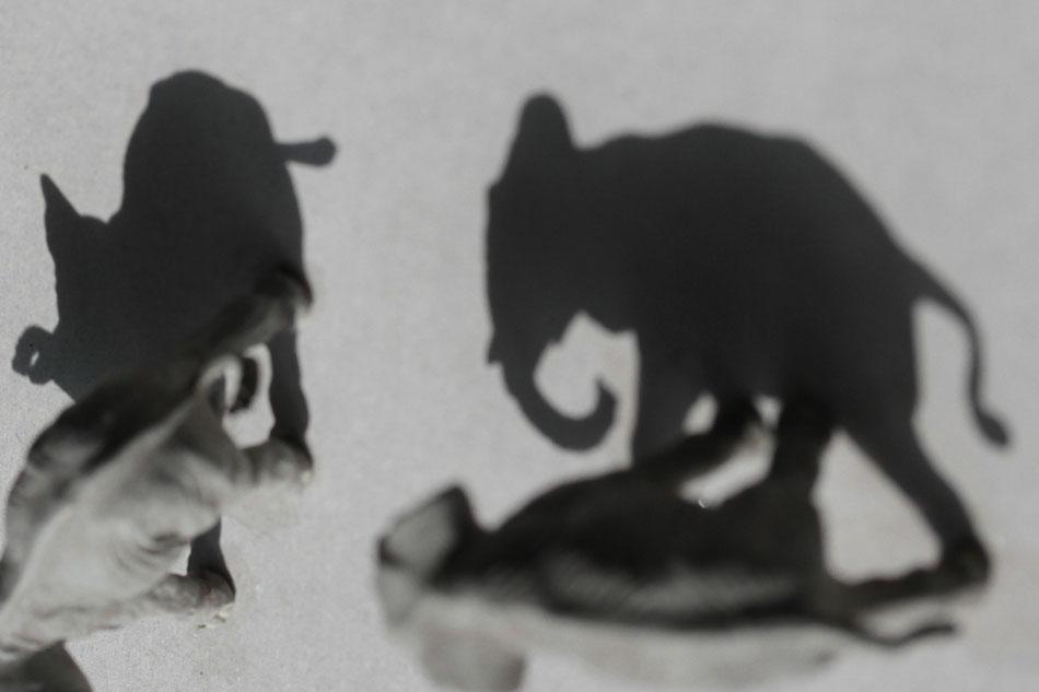 """Große Tiere, kleine Schatten - das Spiel mit """"Groß"""" und """"Klein"""""""