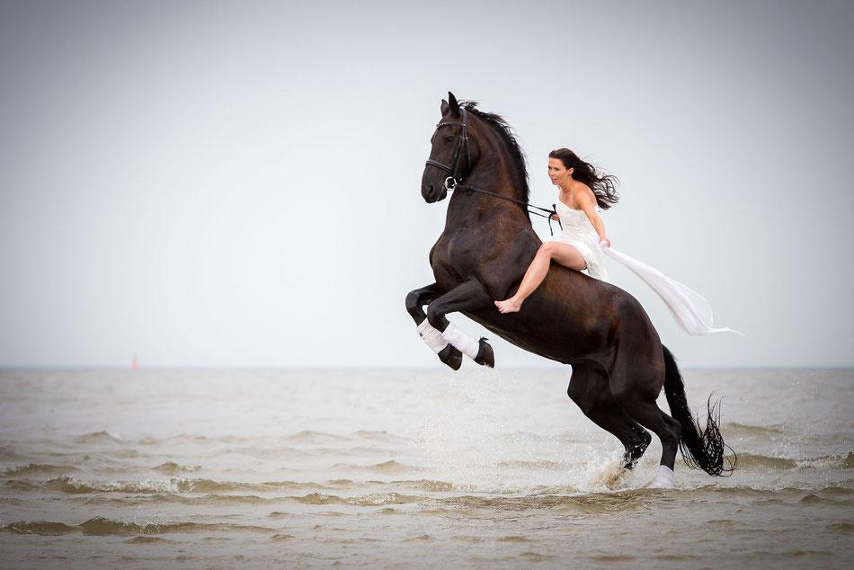 Pferd, braut, hochzeit, nordsee, frau, schleier,