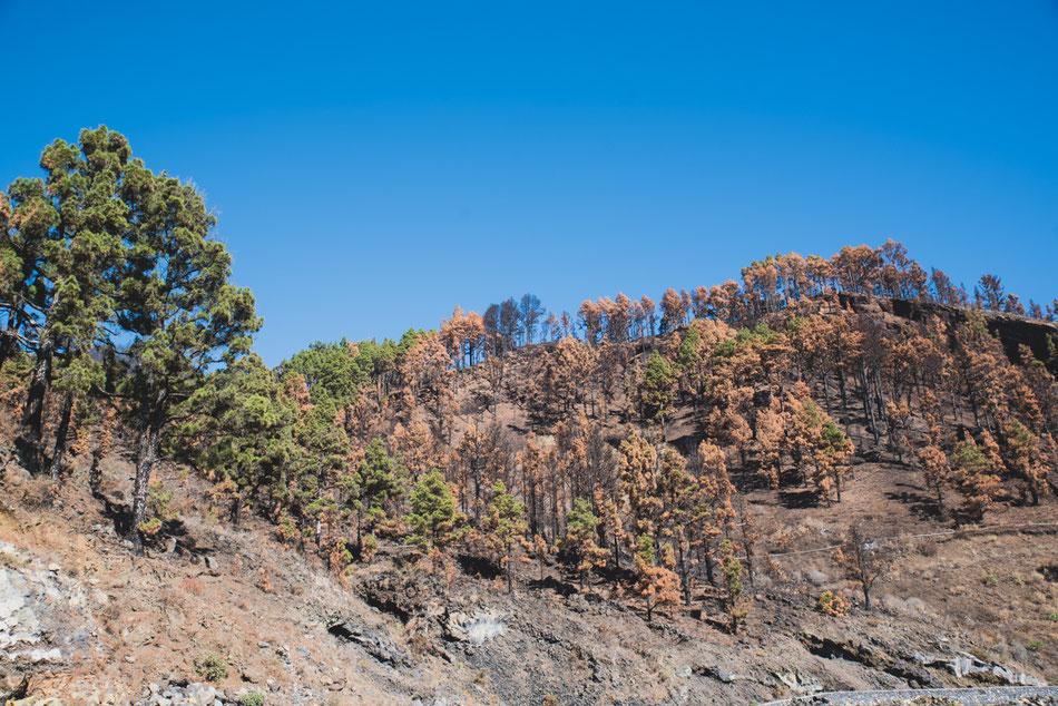 Incendio en Fuencaliente. La Palma
