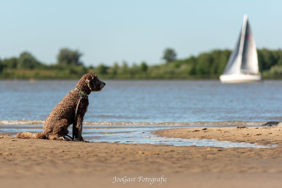 #goldendoodle #hund #tier #hundeleben #hundefotografie #tierfotografie #ichliebehunde #treusterfreund #bestdog #fellnasen