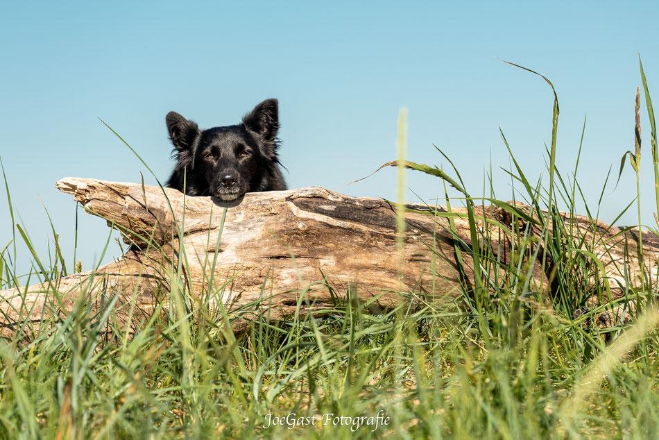 hund, Tierfotografie,Wedel,Joegast-Fotografie,