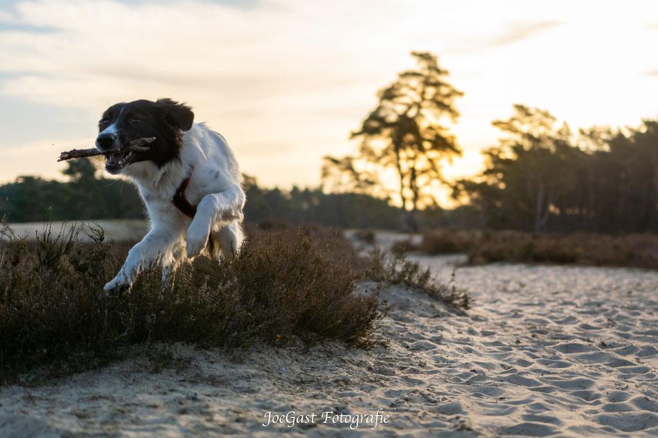 Bella,Strand, Sonnenaufgang, #hund #tier #hundeleben #hundefotografie #tierfotografie #ichliebehunde #treusterfreund #bestdog #fellnasen #,
