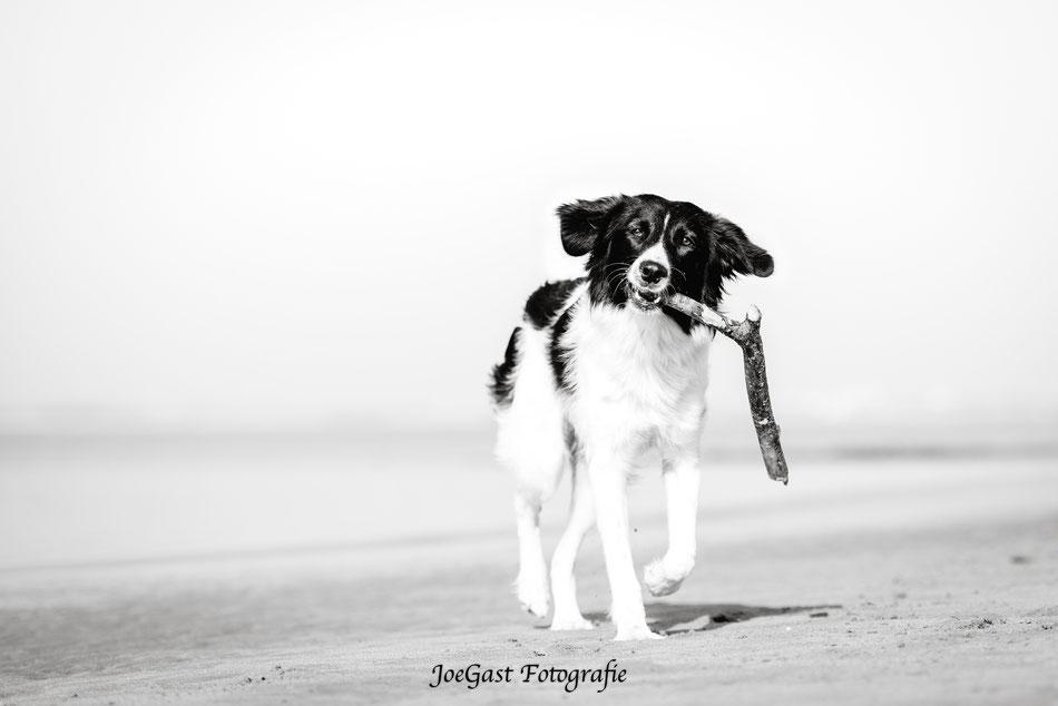 Bella, #hund #tier #hundeleben #hundefotografie #tierfotografie #ichliebehunde #treusterfreund #bestdog #fellnasen,Stand,