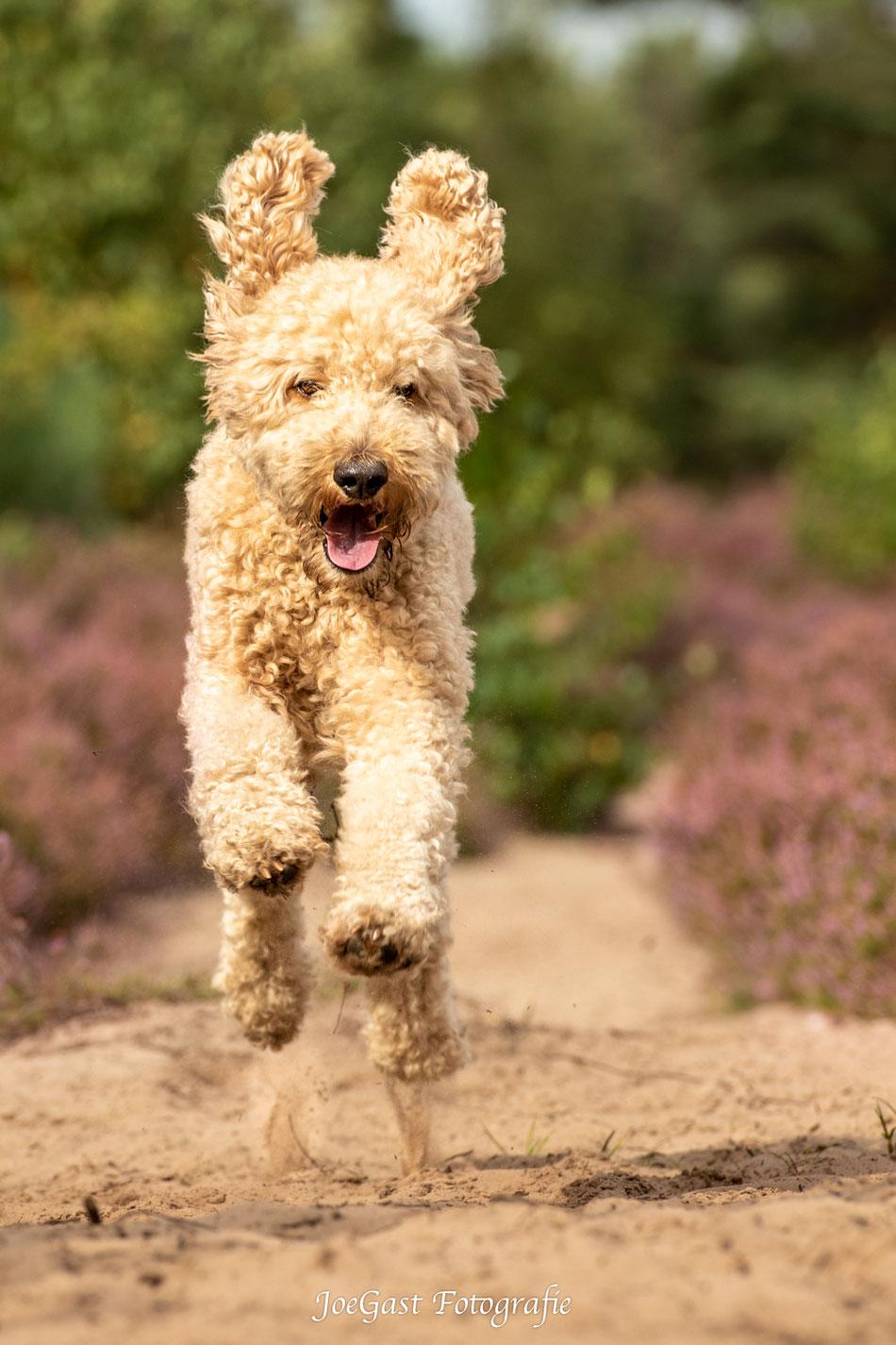 Sabine Hoffmann-Hundetrainerin. Um auf die Homepage zu kommen einfach aufs Bild klicken.