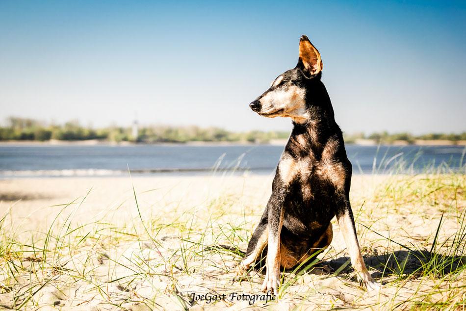 Strand,Elbe,Wasser,Hundefotografie,Tierfotografie