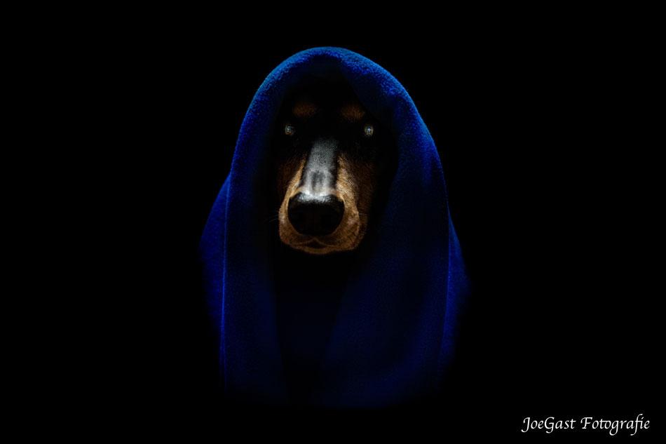 Coffee,Hund,Tierfotografie,Hundemodel,Joegast Fotografie,