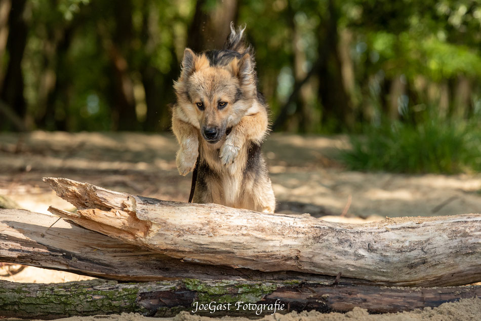 #hund #tier #hundeleben #hundefotografie #tierfotografie #ichliebehunde #treusterfreund #bestdog #fellnasen