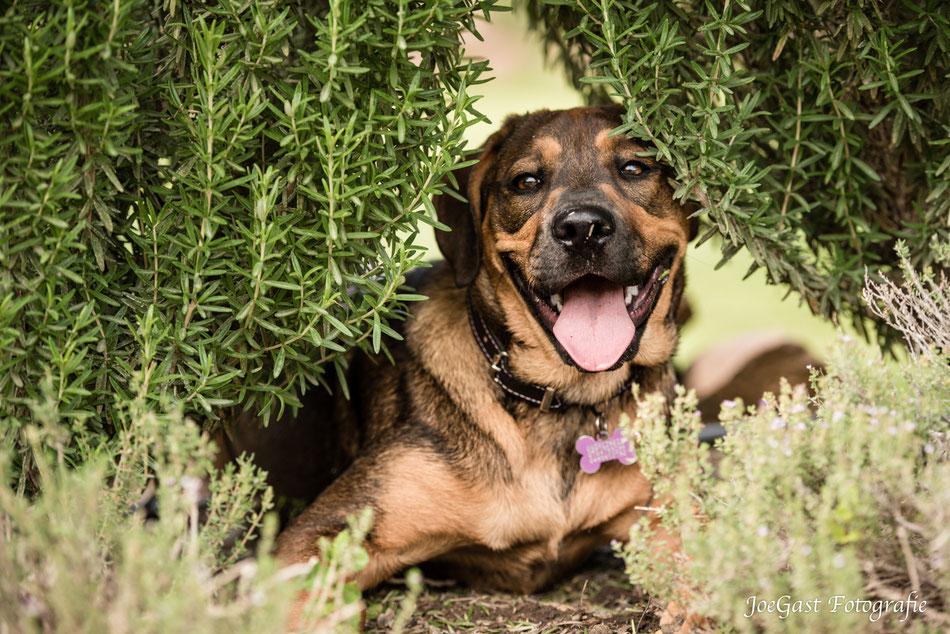 Hund, Südafrika,Tierfotografie,Wedel,Joegast-Fotografie,