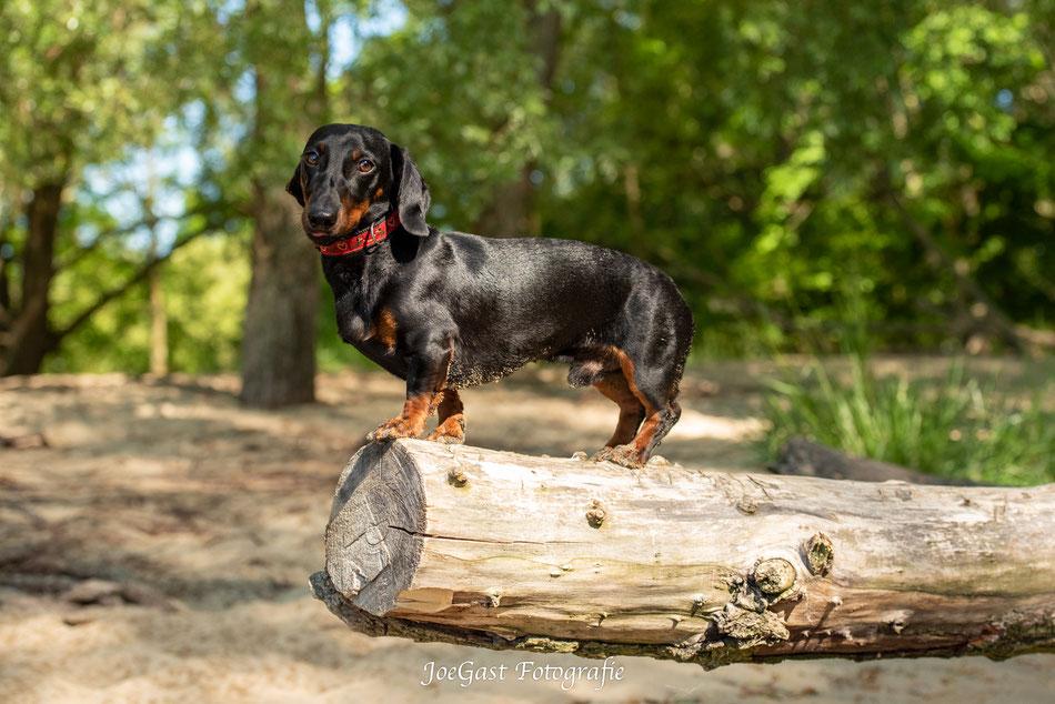 #hund #tier #hundeleben #hundefotografie #tierfotografie #ichliebehunde #treusterfreund #bestdog #fellnasen #dackel #wedel