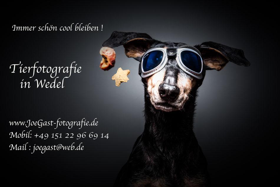 Tierfotografie,Wedel,joegast,Futterspiele,Fangspiele,