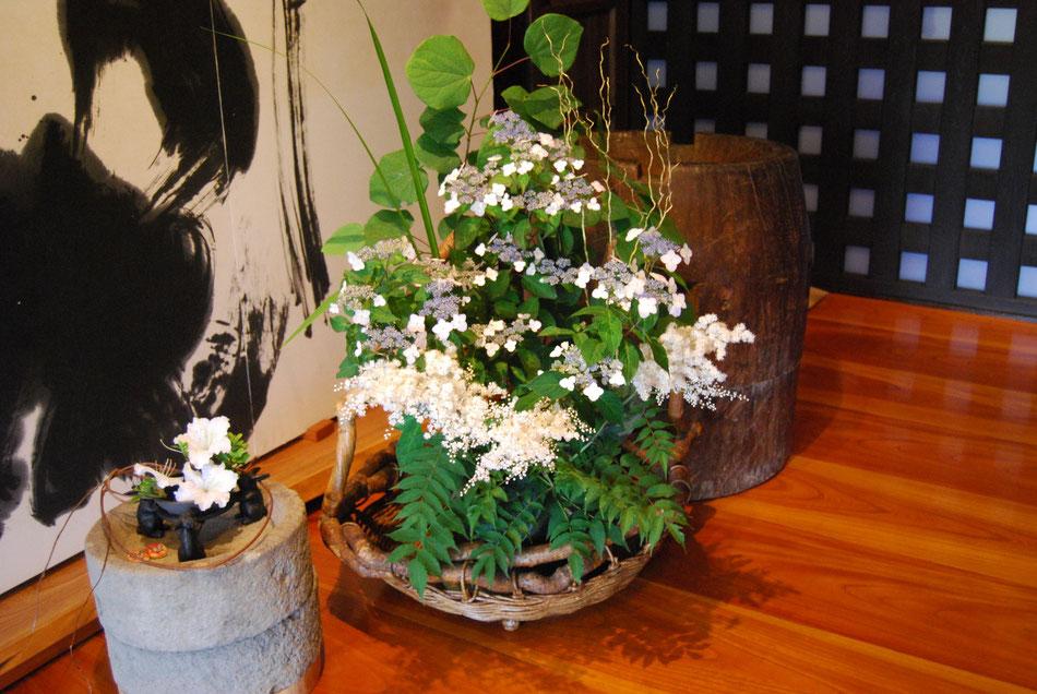 6、7月玄関の花 ガクアジサイ ニワナナカマド