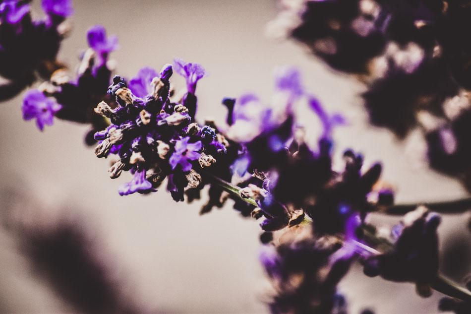 Makrofotografie von Lavendel
