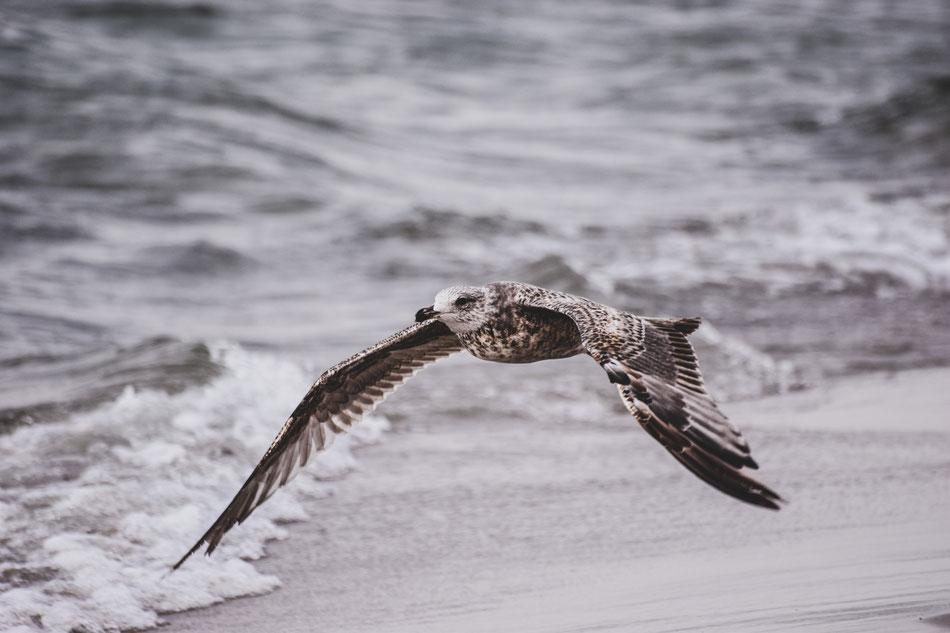 Fotografie – Moewe an der Ostsee