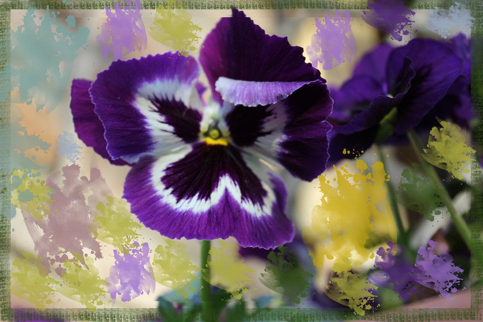 gigantografia di una pianta di viole, pennellata artisticamente per esaltarne i colori che vanno dal blu al viola e al giallo