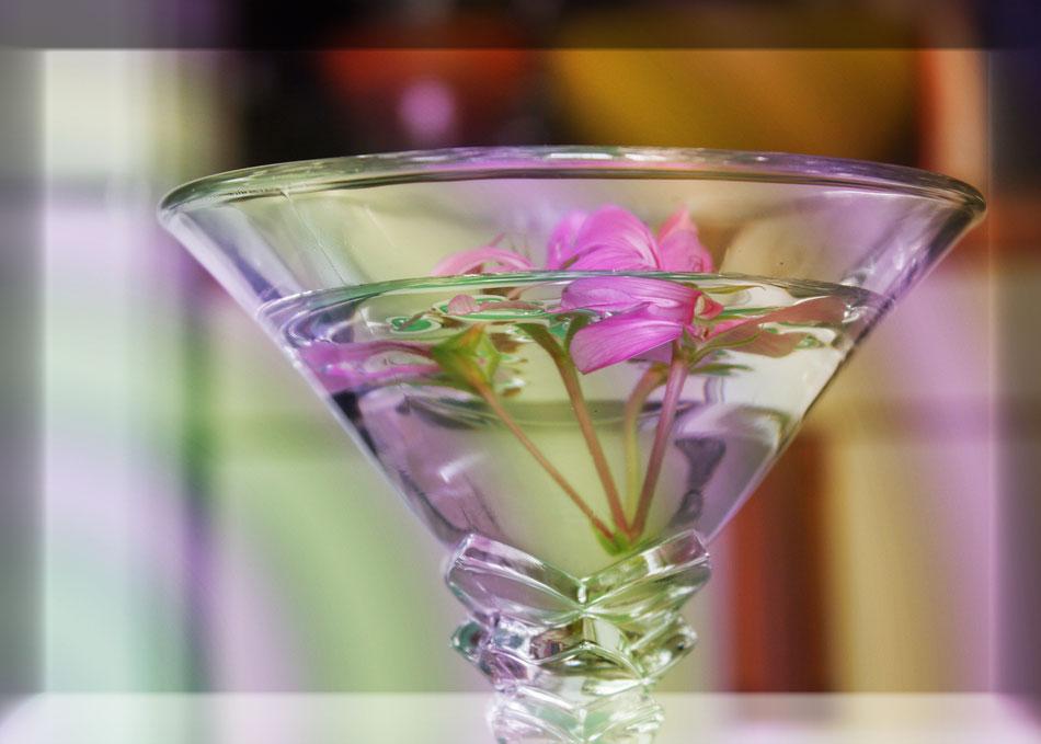 acqua con fiore,geranio,natura,viola,bicchiere,stagioni,insieme di colori